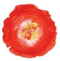 Hawaiiblume, rot, mit Clip zum Anstecken - 1